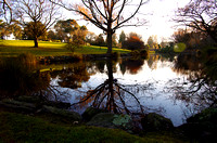 Evening Pond, Timaru Botanic Gardens